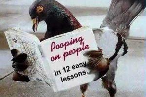 bird-poop